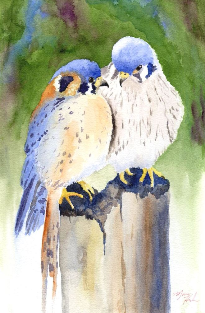 HouleMona_KissMeKestrel_watercolor_350