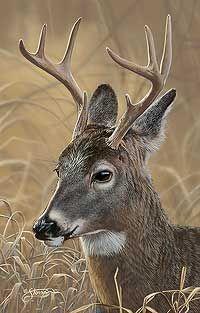 77de7b07cd47ea832ecef62e89b74f1a--deer-art-new-print
