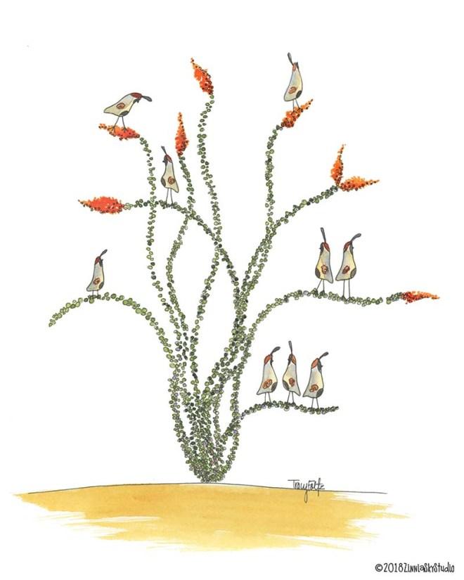 ocotillo quail 1